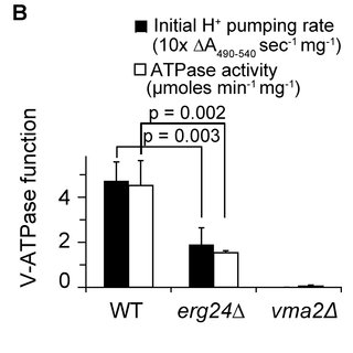 (PDF) Requirement for Ergosterol in V-ATPase Function