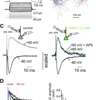 (PDF) Presynaptic effects of NMDA receptors enhance
