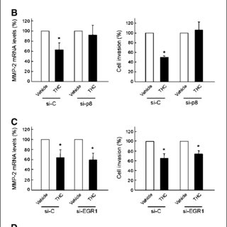 MMP-2 down-regulation is involved in THC-induced