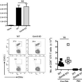 (PDF) Granzyme B Expression by CD8(+) T Cells Is Required