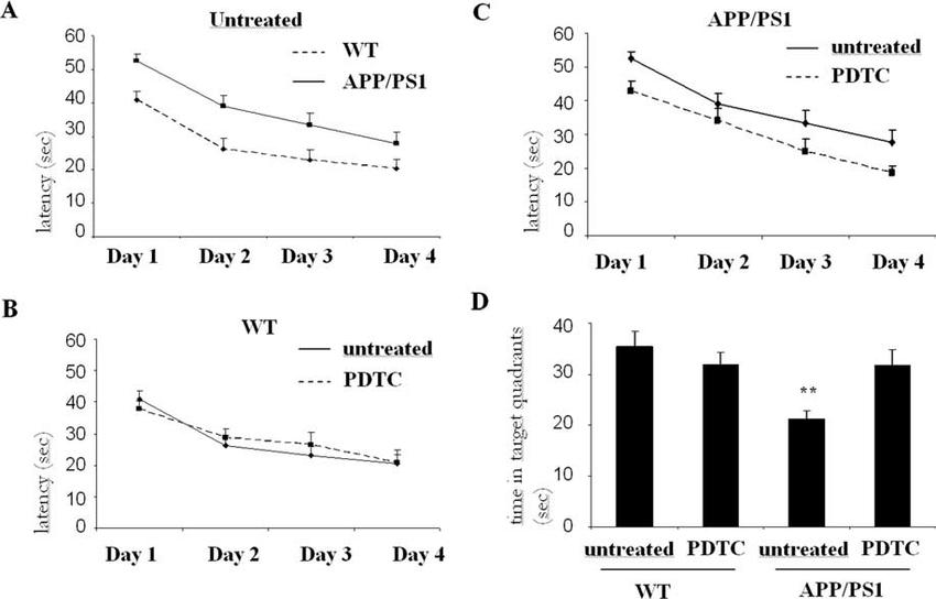 Long-term PDTC treatment prevented the cognitive decline