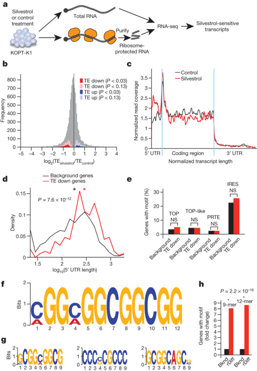 small resolution of ribosome footprinting defines the effects of silvestrol on translation a schematic of the ribosome
