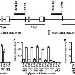 (PDF) Molecular Mechanisms for Synchronized Transcription