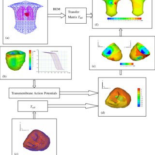 realistic heart diagram lincoln arc welder wiring a schematic of the simulation protocol torso