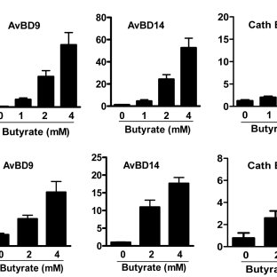 No impact of butyrate on phagocytic (A) or oxidative burst