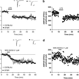 (PDF) Effect of insulin on excitatory synaptic