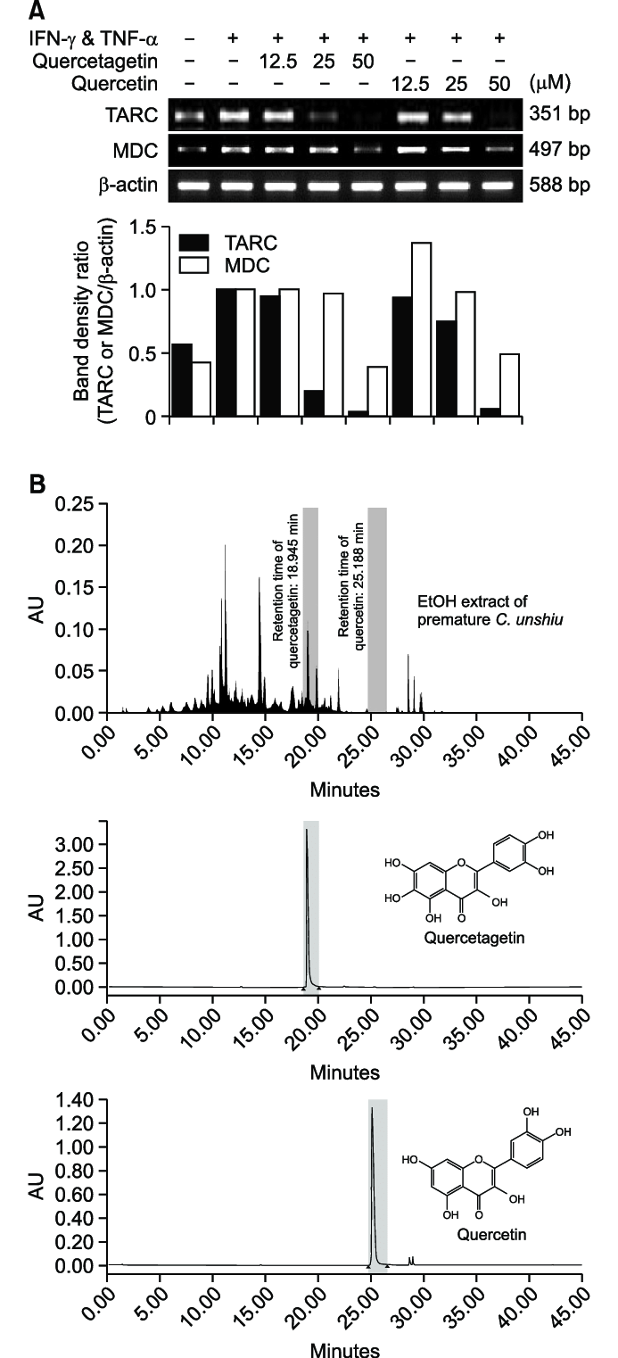 Comparative Analysis between quercetagetin and quercetin