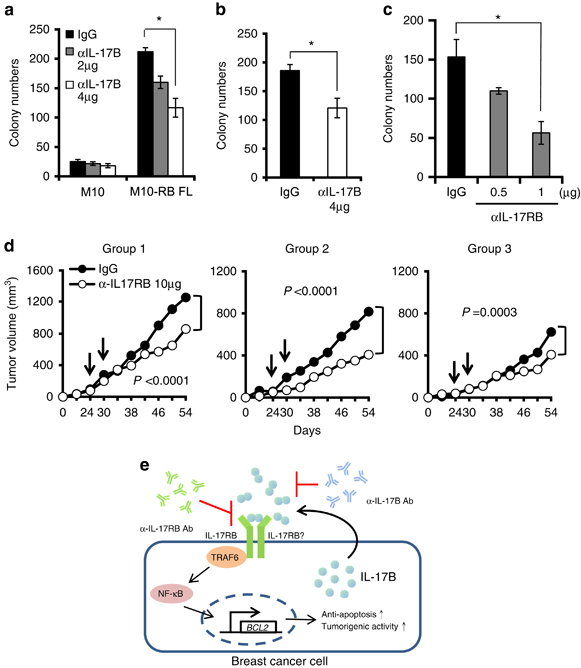 Neutralizing IL-17RB or IL-17B with specific antibodies