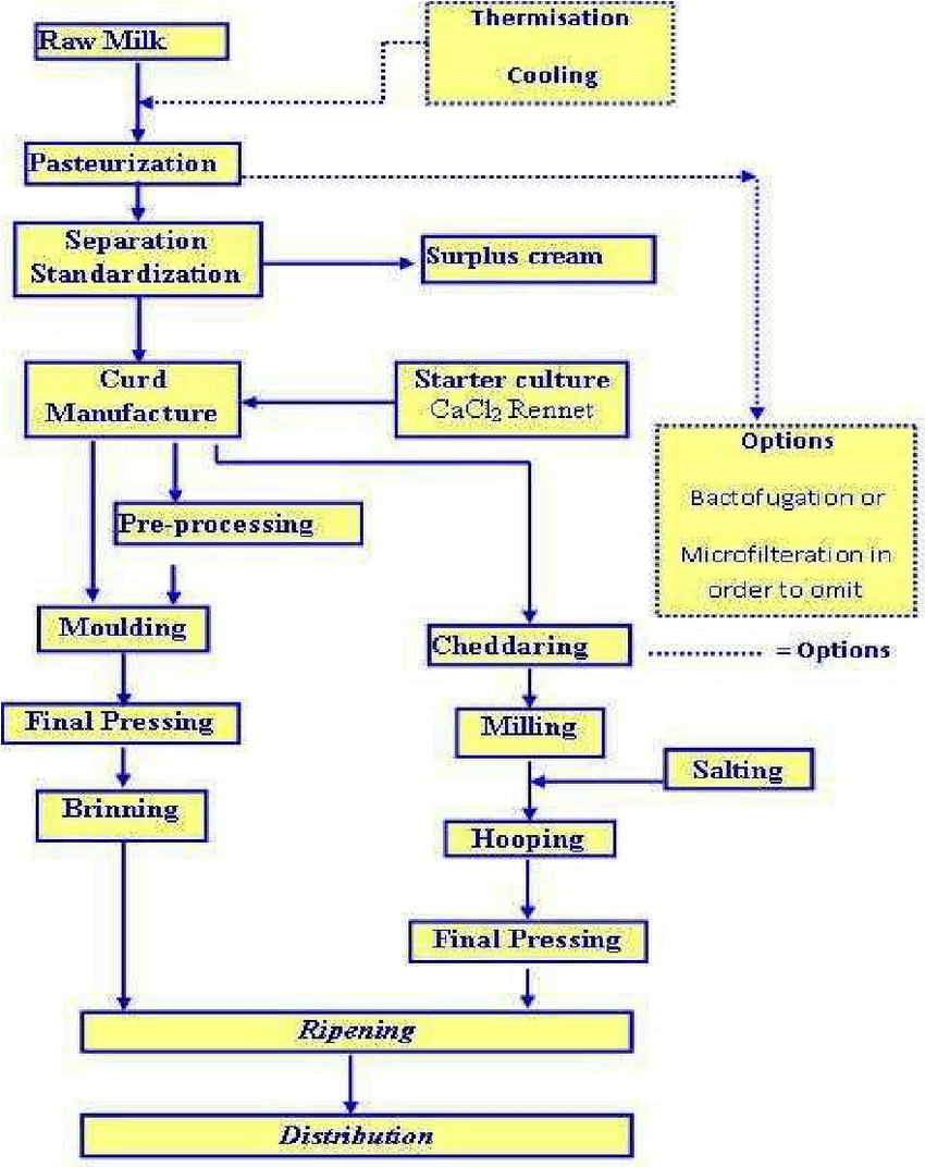 medium resolution of cheese production flow diagram adopted from dairy processing handbook pp290 tetra