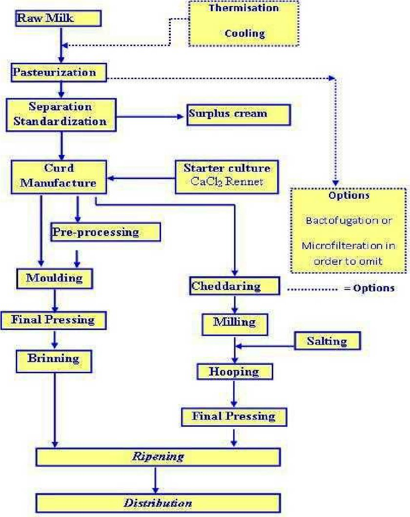 medium resolution of cheese processing diagram electrical wiring diagramscheese production flow diagram adopted from dairy processing process control diagrams
