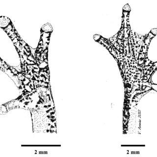 (PDF) A new species of small tree frog, genus