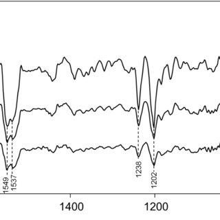 (PDF) Proton Transfers in a Channelrhodopsin-1 Studied by