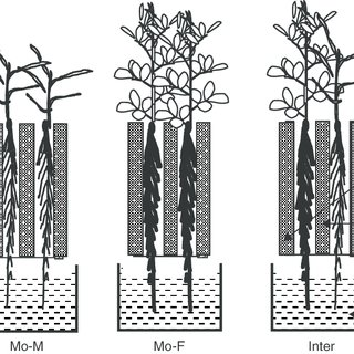 Schematic diagram of different cropping systems: No-plant