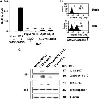 The NLRP3-ASC inflammasome is required for HIV-induced IL