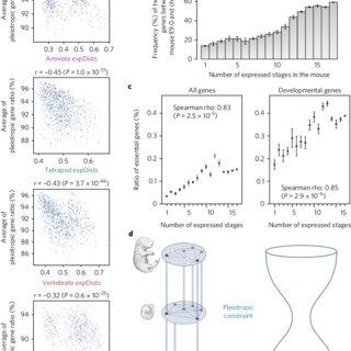 (PDF) Constrained vertebrate evolution by pleiotropic genes