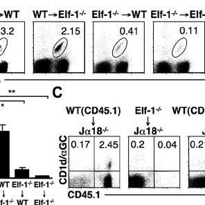 (PDF) Differential requirements for the Ets transcription