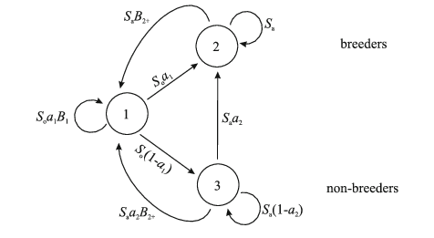 Life-cycle graph and structure of the hypothetical state