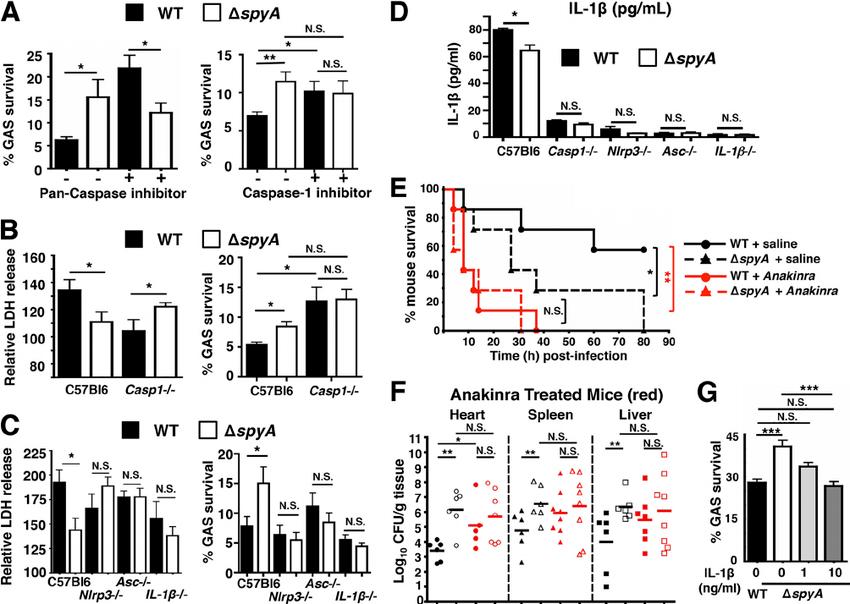 GAS SpyA activation of a caspase-1-dependent inflammasome