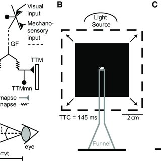 (PDF) A Novel Neuronal Pathway for Visually Guided Escape
