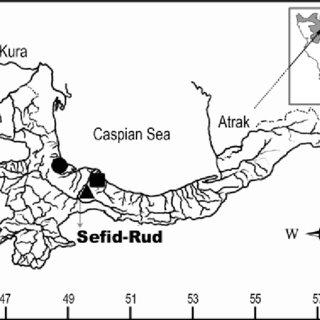 (PDF) Ponticola iranicus sp. nov. (Actinopterygii