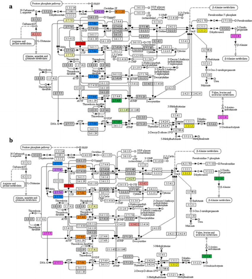 An instance of a KEGG map for Pyrimidine metabolism