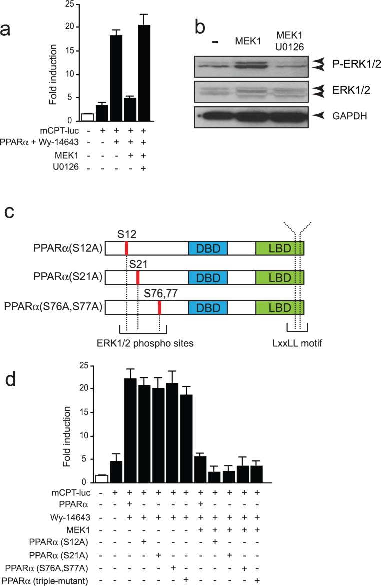 (a) Luciferase measurements on NkL-Tag cells transiently