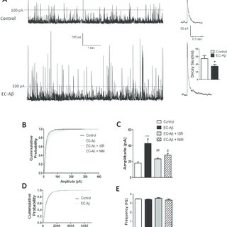 (PDF) Article Preventing Effect of L-Type Calcium Channel