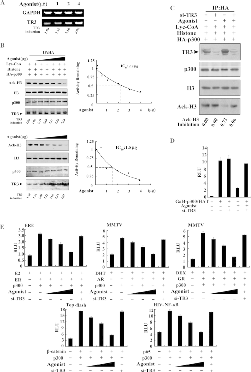 Inhibition of TR3 agonist on p300 HAT activity. (A) Agonist...