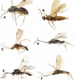 habitus images of selected braconidae a alysia alticola b hormius download scientific diagram [ 850 x 958 Pixel ]