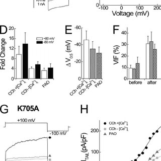 TRPV3 channel activity in excised patches is stimulated by