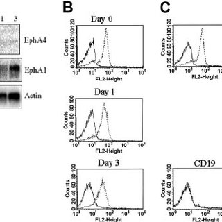 Ephrin-A1 stimulation potentiates FGF2-induced responses