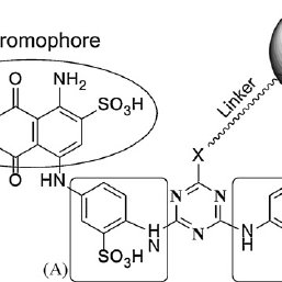Structure of Cibacron Blue 3G-A ® and its linkage to the