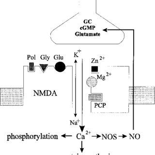(PDF) NMDA Receptor-Mediated Computational Processes and