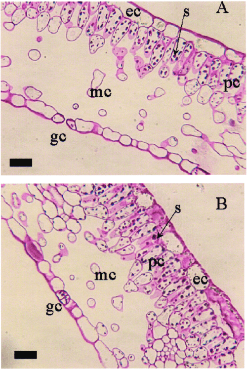 small resolution of light photomicrograph cross sections of baroness rose leaves grown at a high