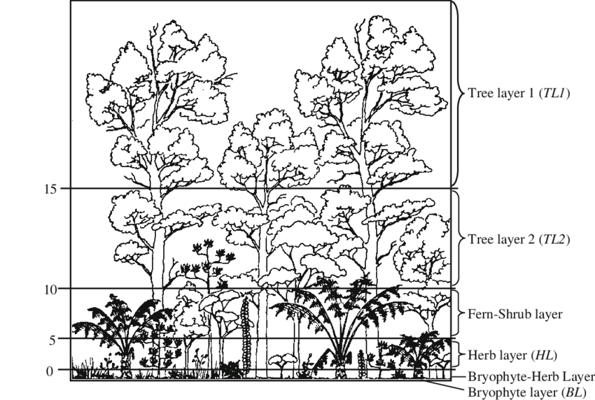 Schematic cross section of a montane rainforest with six