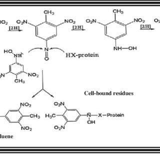 (PDF) Microbial Degradation of 2,4,6-Trinitrotoluene In