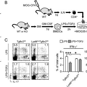 IFN-γ regulates ROS-production in moDCs during EAE. qRT