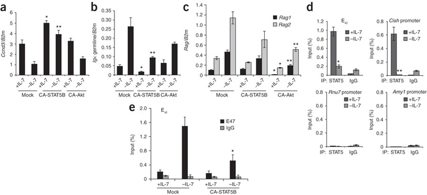 STAT5 regulates Igk transcription and binds directly to Ei