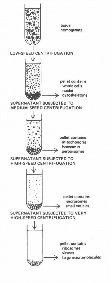 1 . Schematic separation of organelles by differential