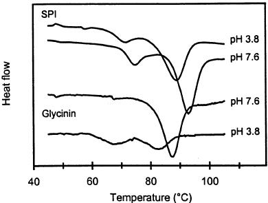 DSC-thermograms of 0.3% (w / v) glycinin and 12% (w / w