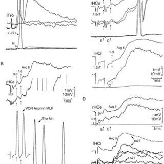 Horizontal canal vestibuloocular reflex (VOR) circuitry in