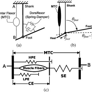 (PDF) Control of a Powered Ankle–Foot Prosthesis Based on