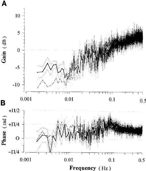 Transfer function from spontaneous fluctuations of renal