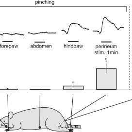 (PDF) Acupuncture Affects Regional Blood Flow in Various