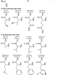 Chemical classifications and structures of amino acids in human also rh researchgate