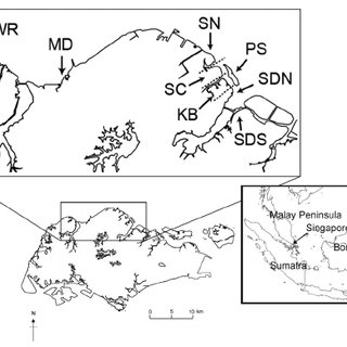 (PDF) Distribution and prey of migratory shorebirds on the