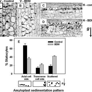 Double-labeling immunofluorescence images of actin network