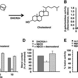 One-step growth curve of HSV-1 in cholesterol-deficient