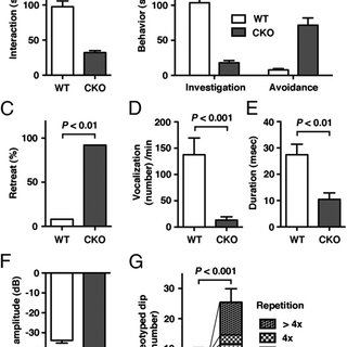 Autism-like behaviors of Ext1 CKO mice. (A-C) Impairments