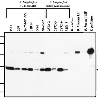 FPLC purification of native Oms28 and porin activity of